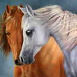 horse 14
